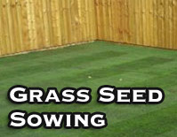 Grass Seed Sowing