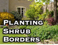 Planting Shrub Borders